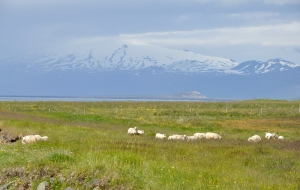 Kolbeinsstaðir