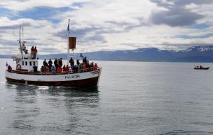 Husarvik, eine Whale Watchin Tour