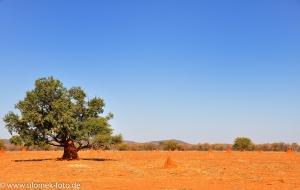 Auf dem Weg nach Khorixas Stop bei Termitenhüglen