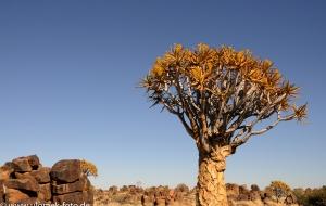 Köcherbaumwald Namibia 2013