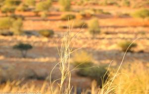 Ausfarhr von der Kalahari Lodge Namibia 2013
