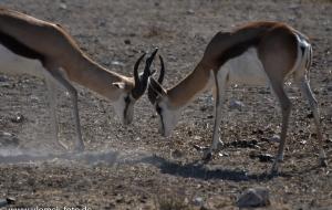 Etscha Nationalpark, Namibia 2013 Tag2