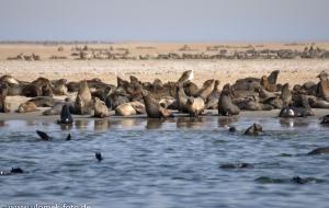 Pelikanpoint bei Walvisbay Namibia 2013