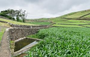 viel Grün mit Mauern, Blick von oben auf Angra do Heroismo, auf Terceira