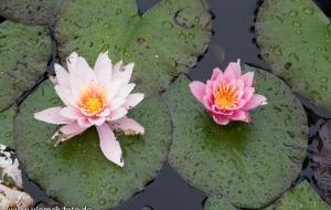 Brigit´s garden und Clifden 10.07.16