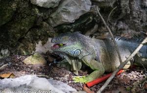 Cenote Crisllina San Jose