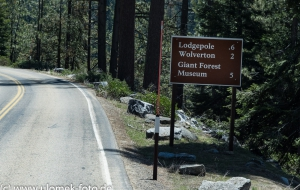 Sequoia National Park, Grand Grove Visitor Center, Giant Forrest, General Sherman Tree