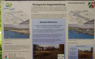 Siegauen und Siegmündung Wanderung 24.05.2020